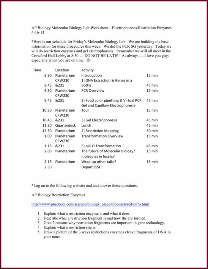 Restriction Enzyme Worksheet High School