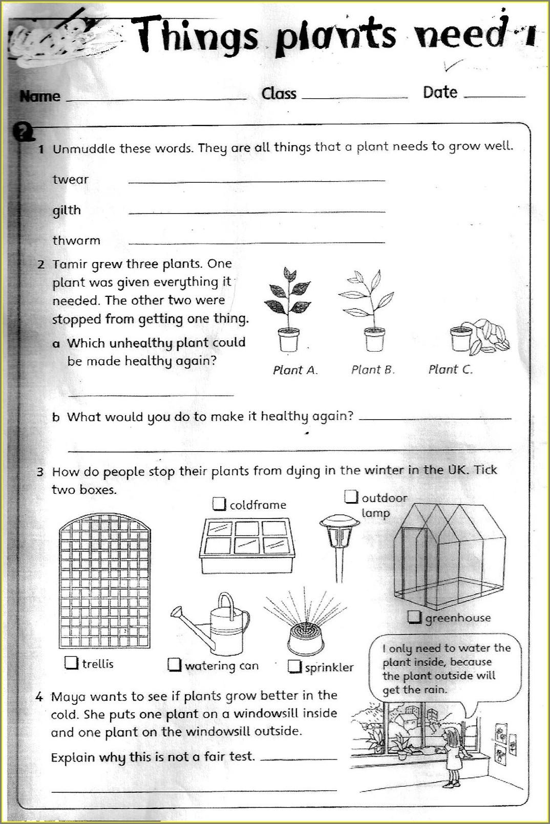 Third Grade Science Worksheet Free