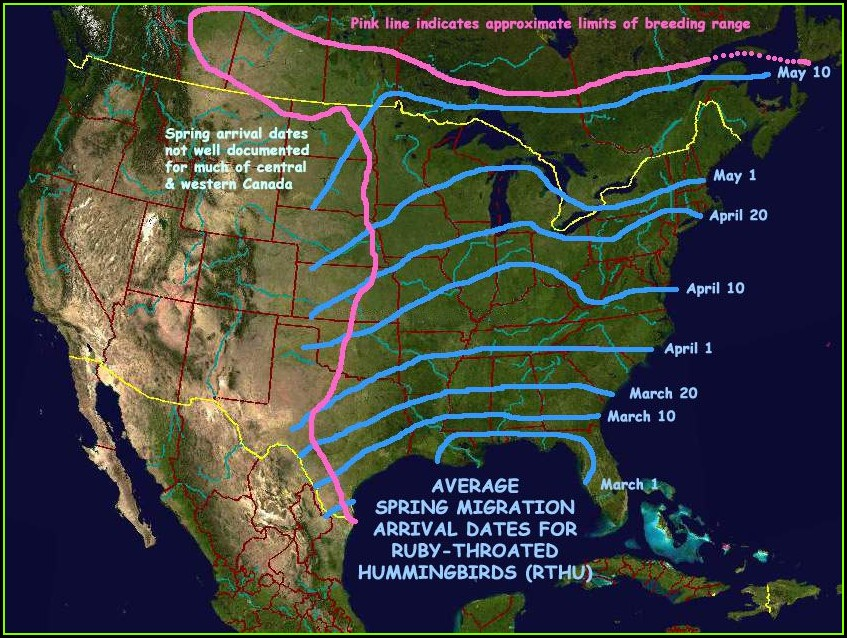 Hummingbird Migration Map 2018