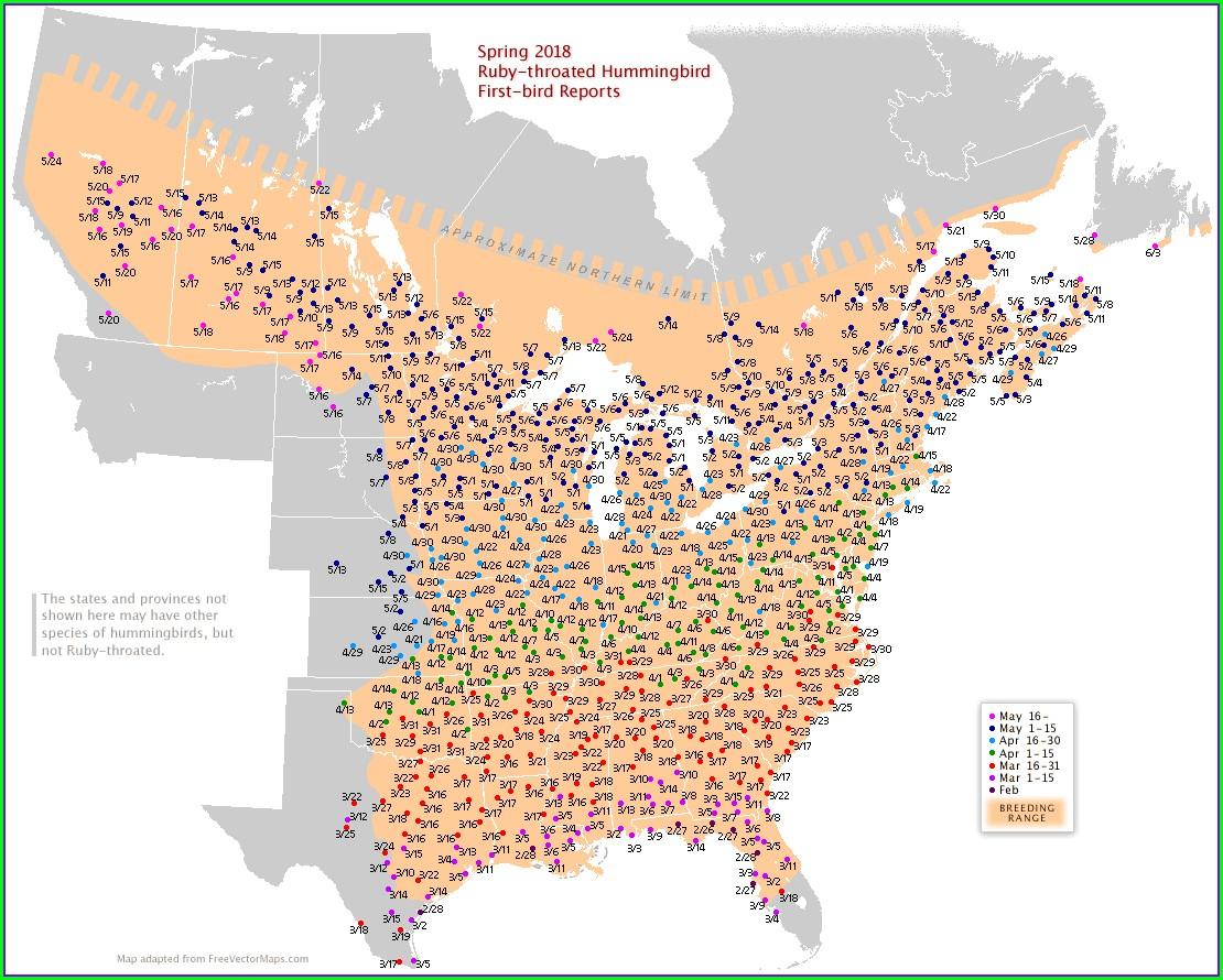 Hummingbird Migration Map 2019 Google