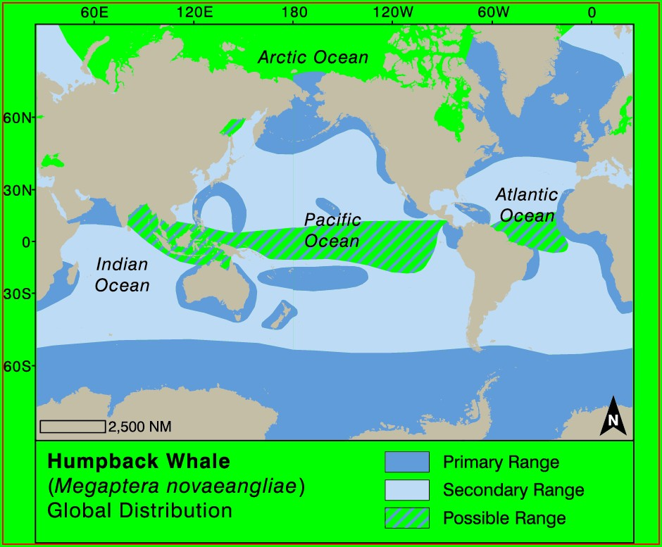 Atlantic Humpback Whale Migration Map