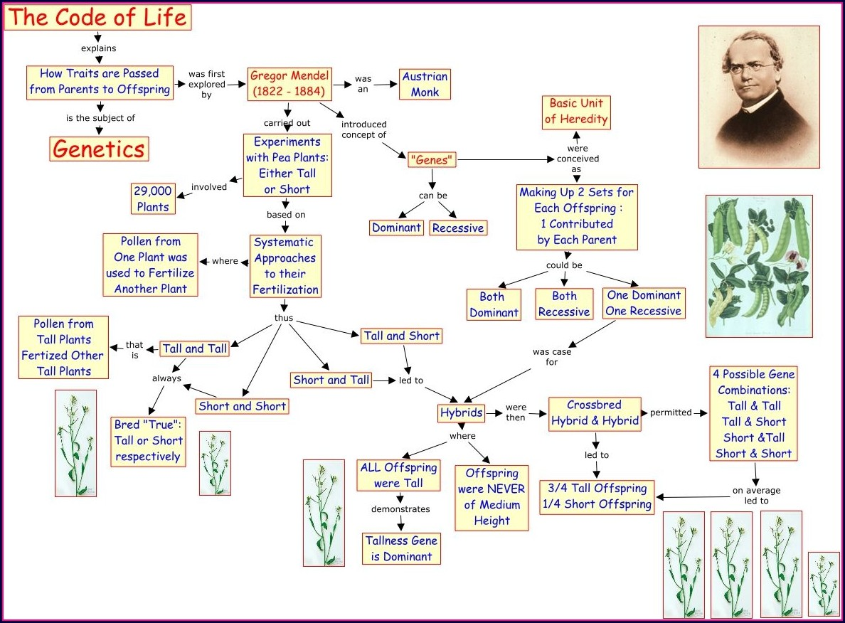 Cell Reproduction Concept Map Answer Key Biology Junction