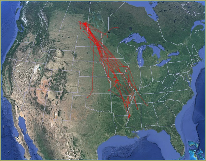 Ducks Org Migration Map
