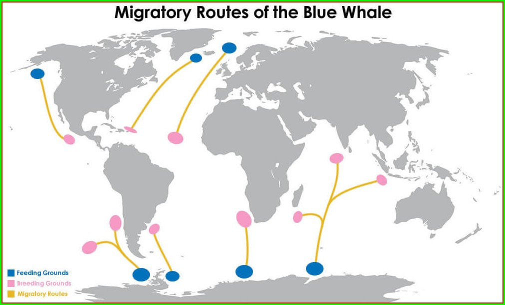 Humpback Whale Migration Route Map
