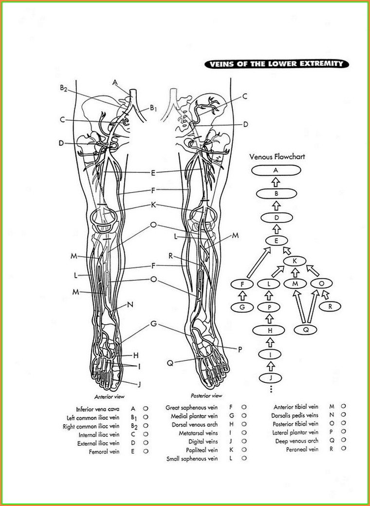 Leg Vein Map For Injecting
