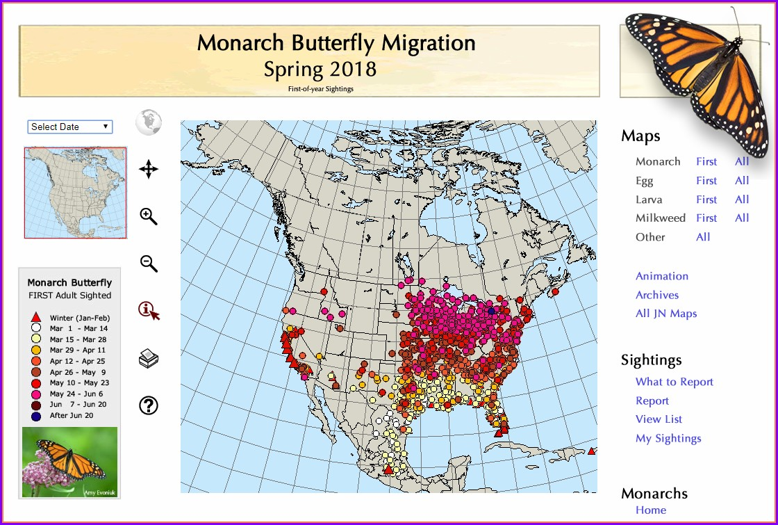 Painted Lady Butterfly Migration Map 2019