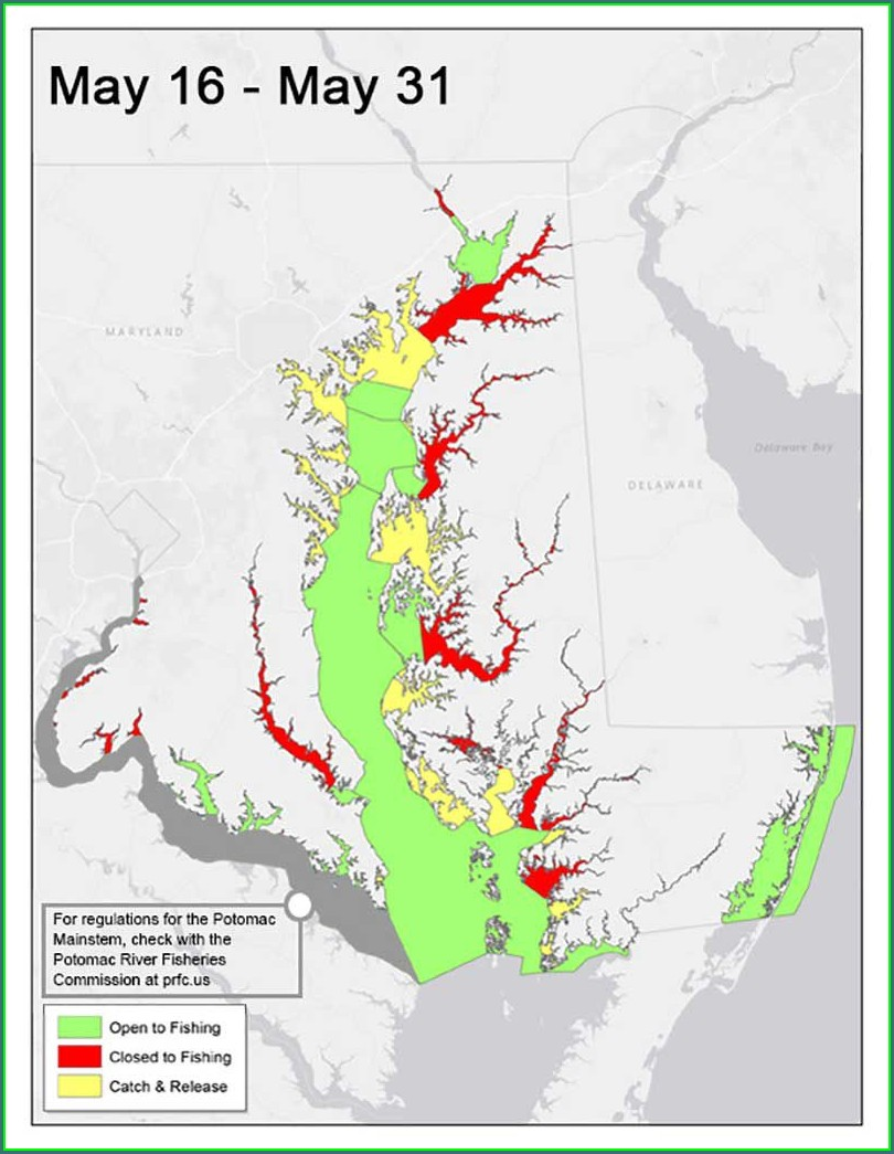 Striped Bass Migration Map July 2020