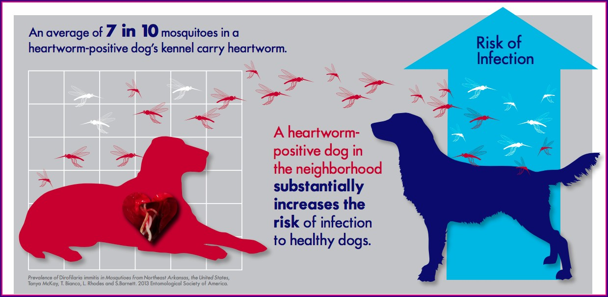 Heartworm Prevalence Map 2019