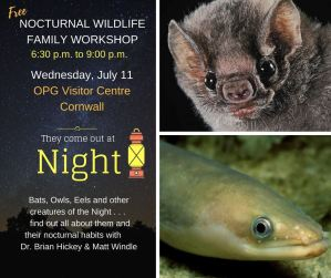 Creatures of the Night Nocturnal Wildlife Family Workshop @ St. Lawrence Power Development Visitor Centre |  |  |
