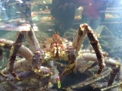 King Crab! Fish Me, Begen Fish Market