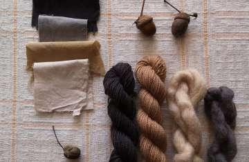 acorn dyes
