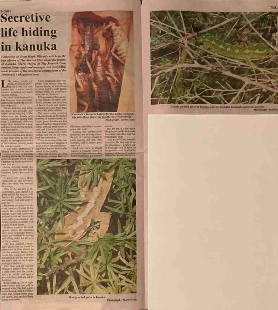 Secretive Life hiding in Kanuka, Marie Haley  Akaroa Mail