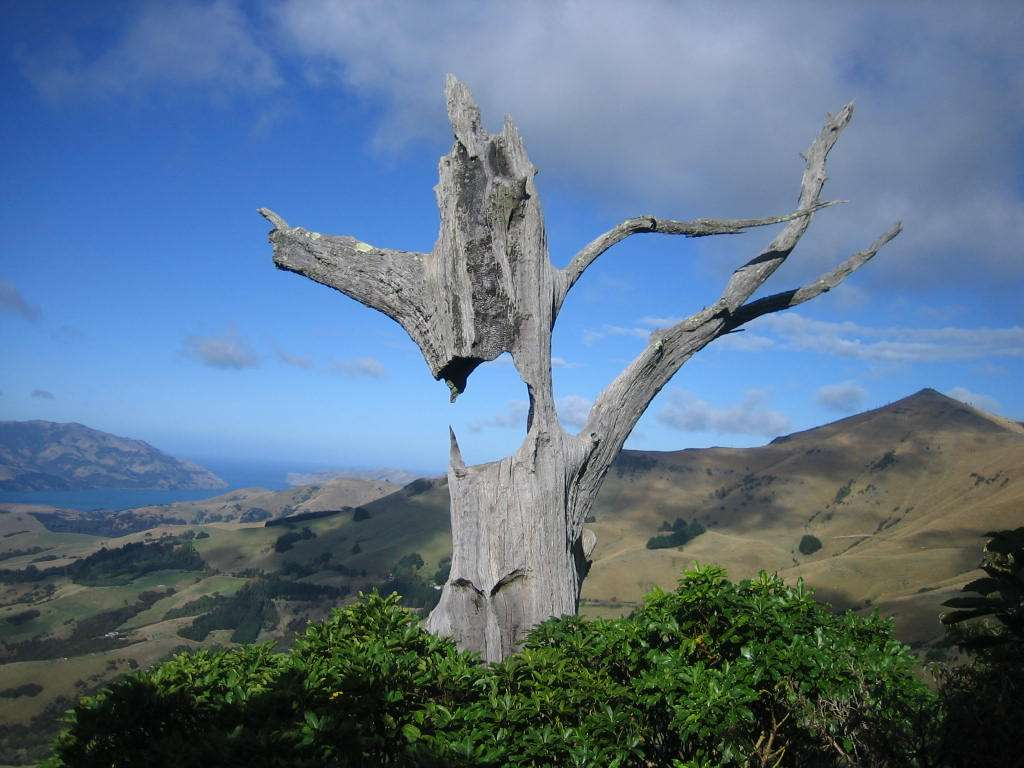 Read more about the article 5 Local Secrets on the Christchurch to Akaroa Road.