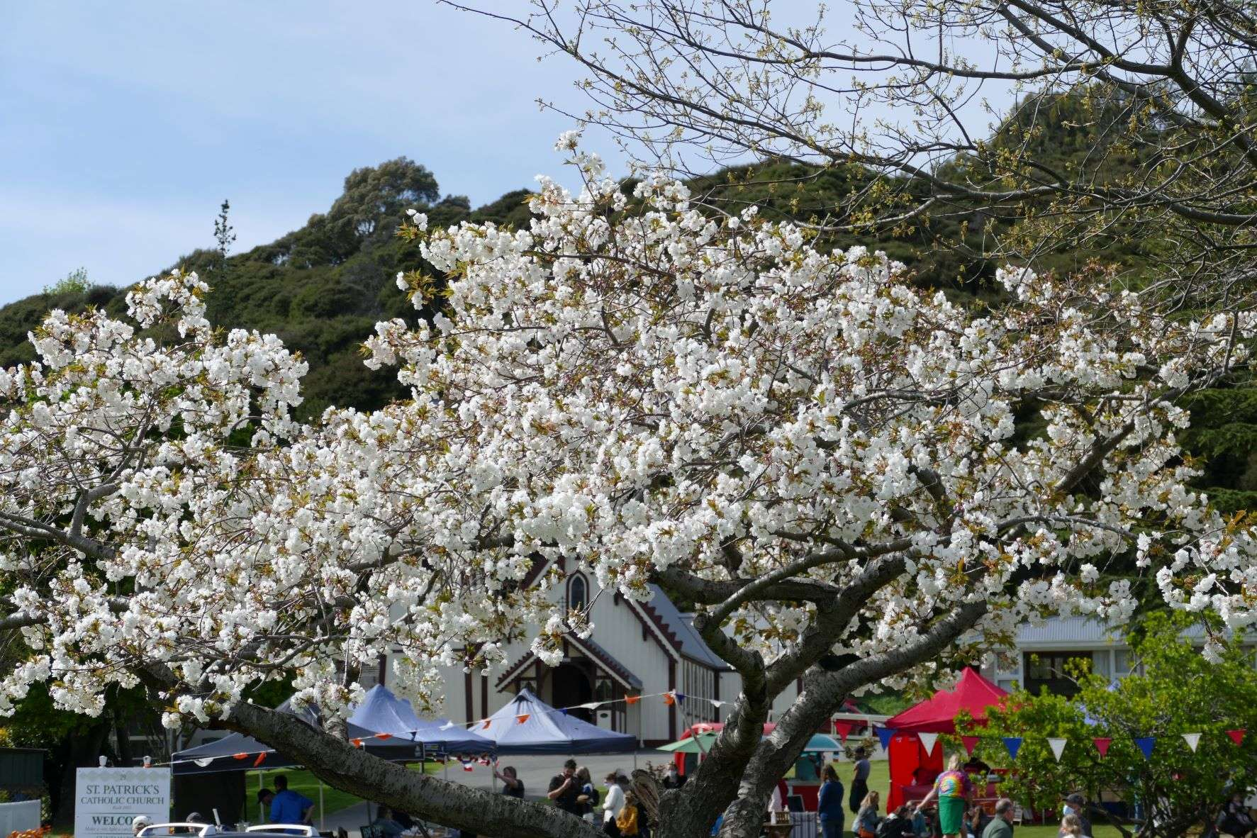 Read more about the article Akaroa Farmers Market: Everything You Need to Know!