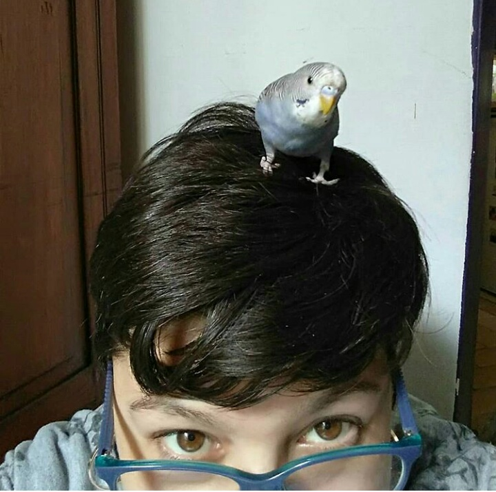 A shot of a woman's face peeping up behind a pair of blue glasses. Perching on her head is a budgerigar.