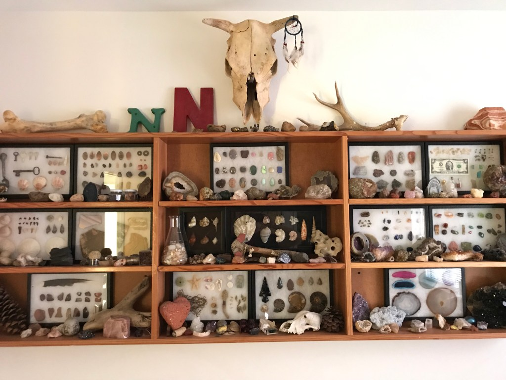 Large rock, fossil, and artifact collection on shelves