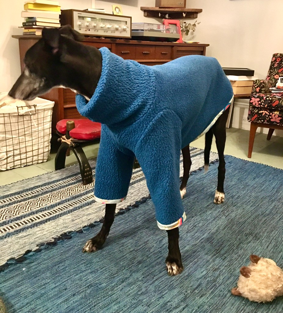 A greyhound dog standing in a house wearing a fleecy blue sweater with a funnel collar.