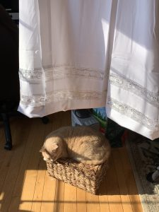 The lower portion of a white alb hangs from a hook in the ceiling. Visible are the two lace panels near the hem. There is an orange cat curled up in a patch of sunshine, directly underneath the hanging garment.