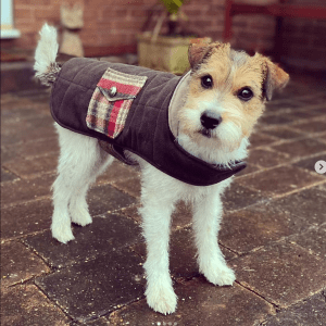 cute dog wearing a little jacket with a pocket on the side
