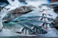 Local Irish Fish
