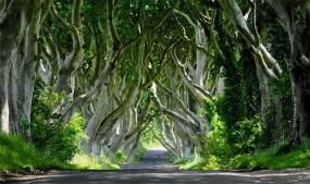 Dark Hedges Aka Game of Thrones