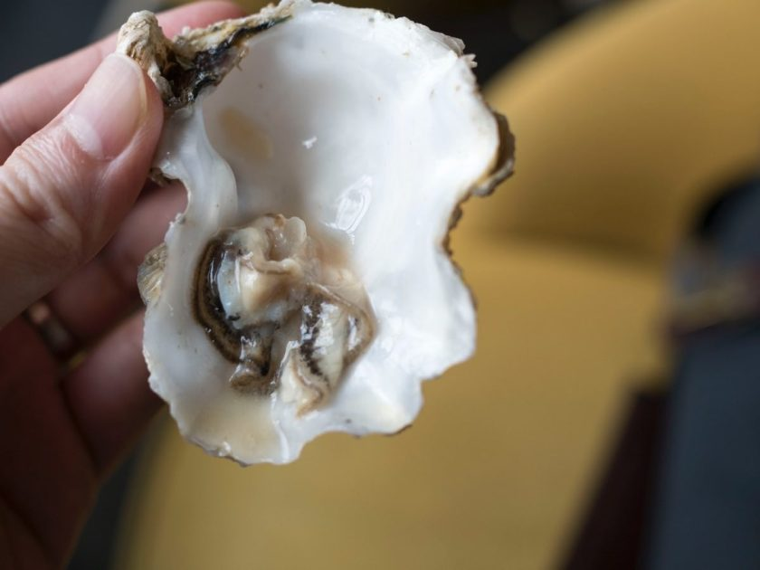 Oyster Shucking Fail
