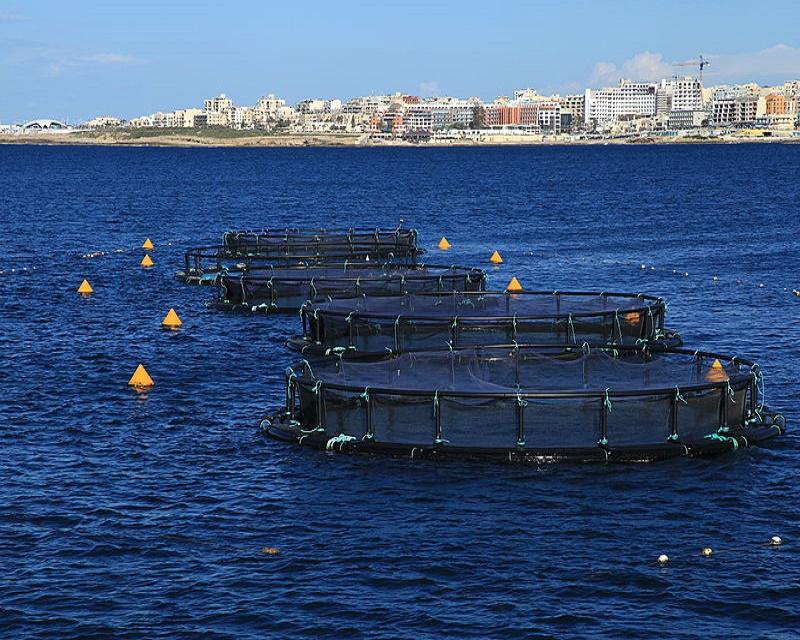 Azzopardi Fisheries' tuna pens in St Paul's Bay