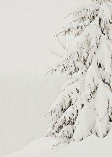 theshinystuff-wordpress-com_christmas-mood_winter_1