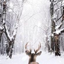 theshinystuff-wordpress-com_christmas-mood_winter_10