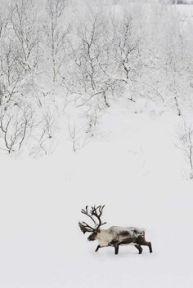 theshinystuff-wordpress-com_christmas-mood_winter_7