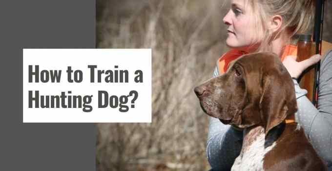 How to Train a Hunting Dog?