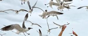 feedingseagulls (3)