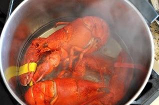 lobstersteamed