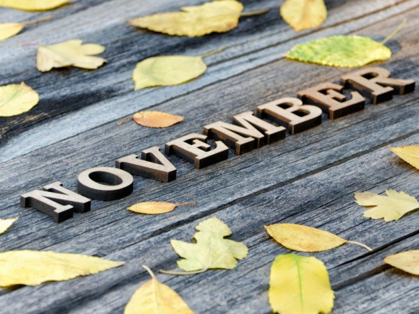 November Brings Good Cheer