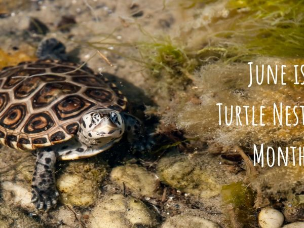 Give Turtles a Brake