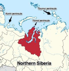 Image result for tundra nenets