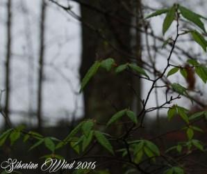dark forest feeling