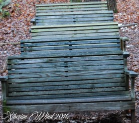 row of weathered benches in the leaves