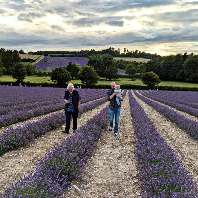 lavender fields at castle farm kent during sunset