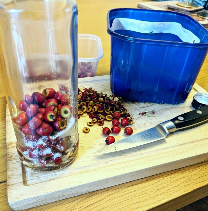 preparing hawthorn berries to make hawthorn gin recipe