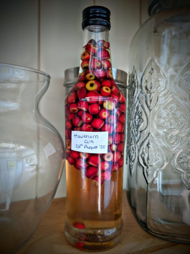 how to make hawthorn gin at home with hawthorn berries