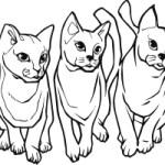 Cat 8