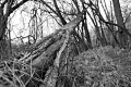 Our roots run deep, deep, deep in this earth....Predator Trees Are Everywhere. Schuylkill River Trail. Valley Forge National Park, PA