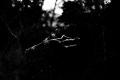 Satan's Trident. Predator Trees Are Everywhere...EVERYWHERE...One of the trails on Assateague Island National Seashore. Chincoteague, VA