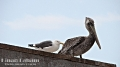 The stork: Ah! I am sick of humans with cameras. Don't they ever get enough?<br /> Seagull: Ignore'em & they will go away! Morro Bay, CA