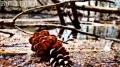 Fallen Pine cob seen in a pond near gate 35