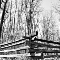 The fences and tree line behind the arch. Valley Forge National Park. King Of Prussia, PA