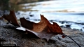 Leaf on the shore of Lake Wintergreen
