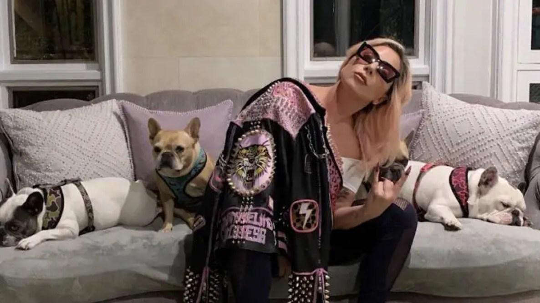 Lady Gaga with her three bulldogs