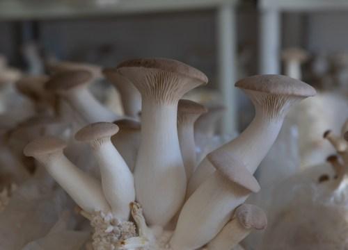 Shroom-ology from the Hazel Dell Mushroom Expert